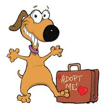 dog adopt me