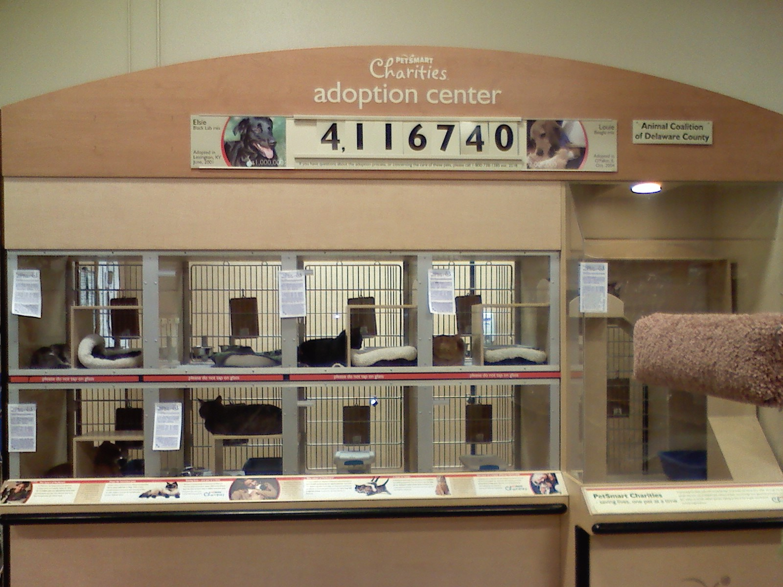Petsmart Springfield Pa Cat Adoption