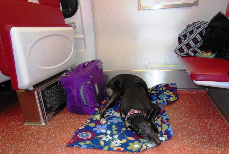 Bella Snoozing on the Train