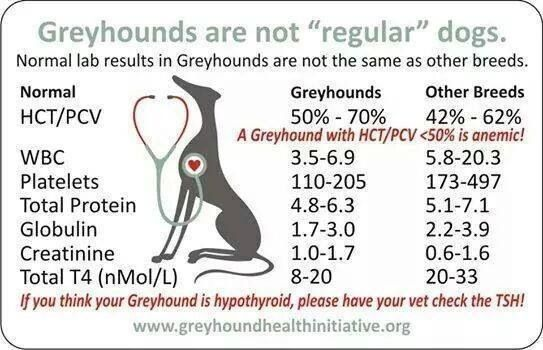 Greyhound Health Card1