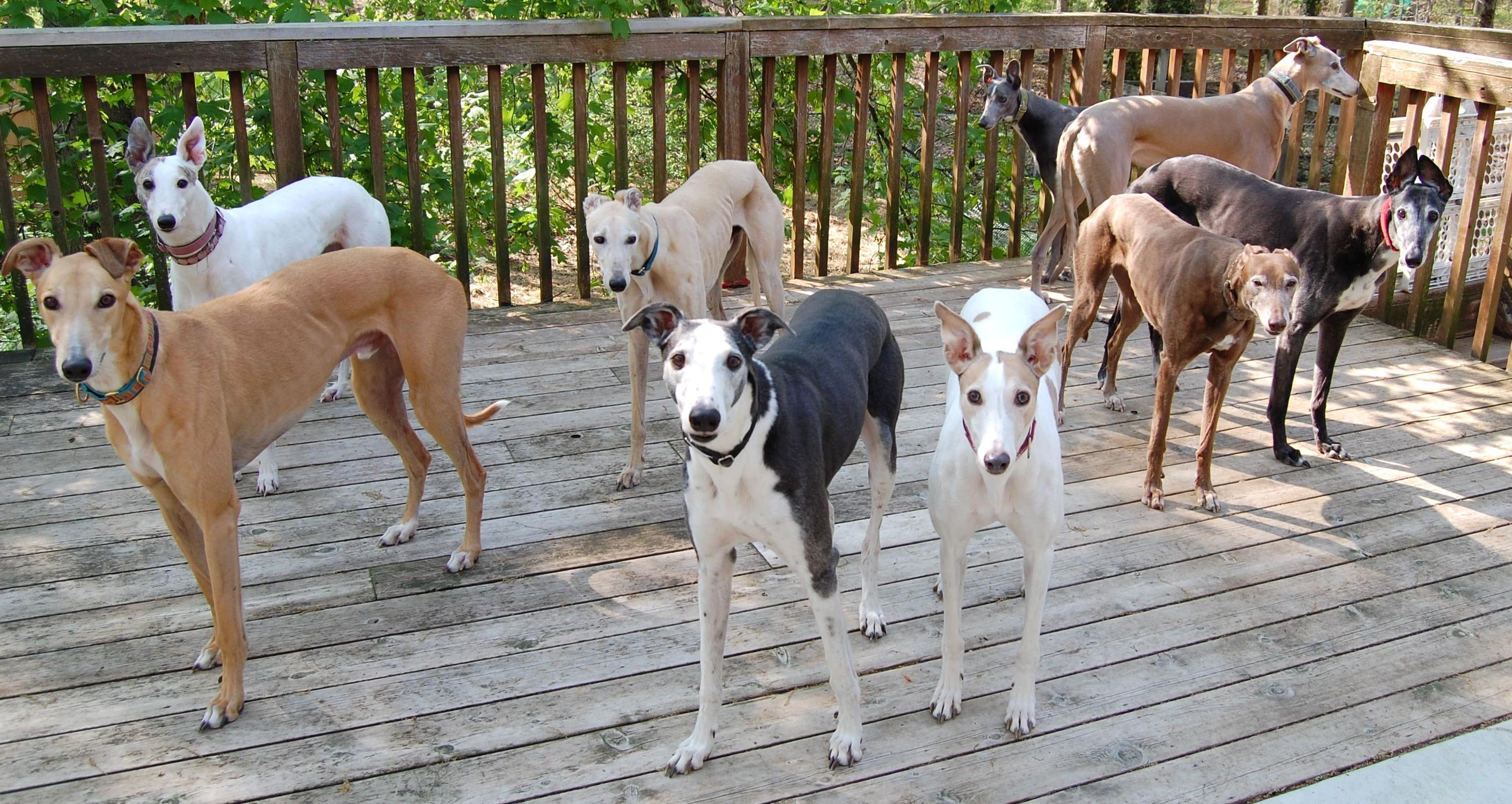 Lyman Dogs