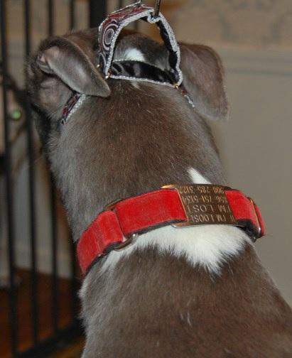 Proper Fitting Collar 1