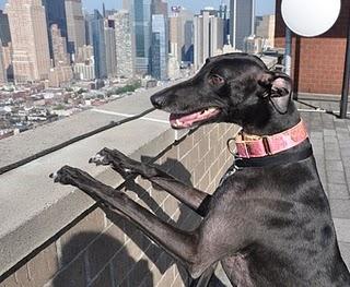 Bella in NYC Newsletter