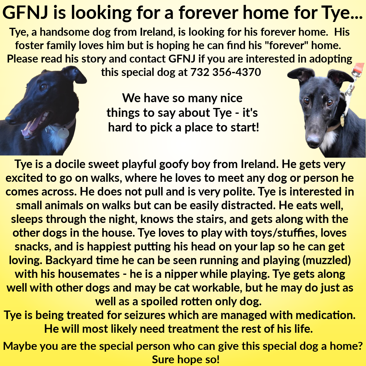 Tye Adoption Flyer