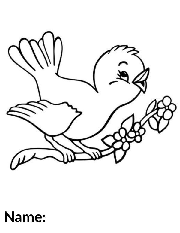 2020 Bird
