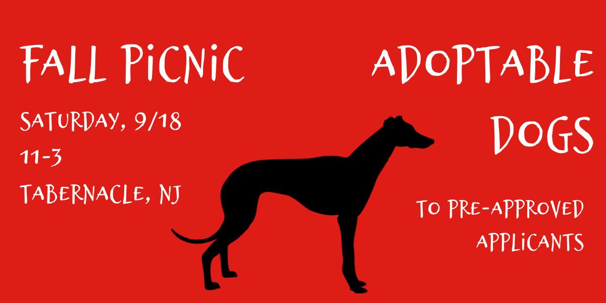 2021 Fall Picnic Dogs
