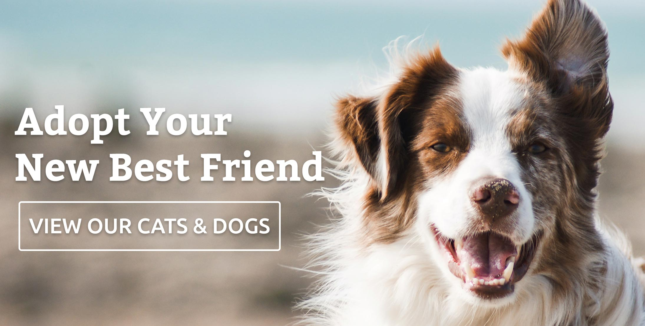 Click to view our adoptable cats and dogs.