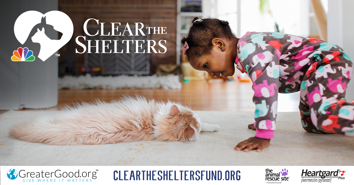 Clear the Shelters campaign