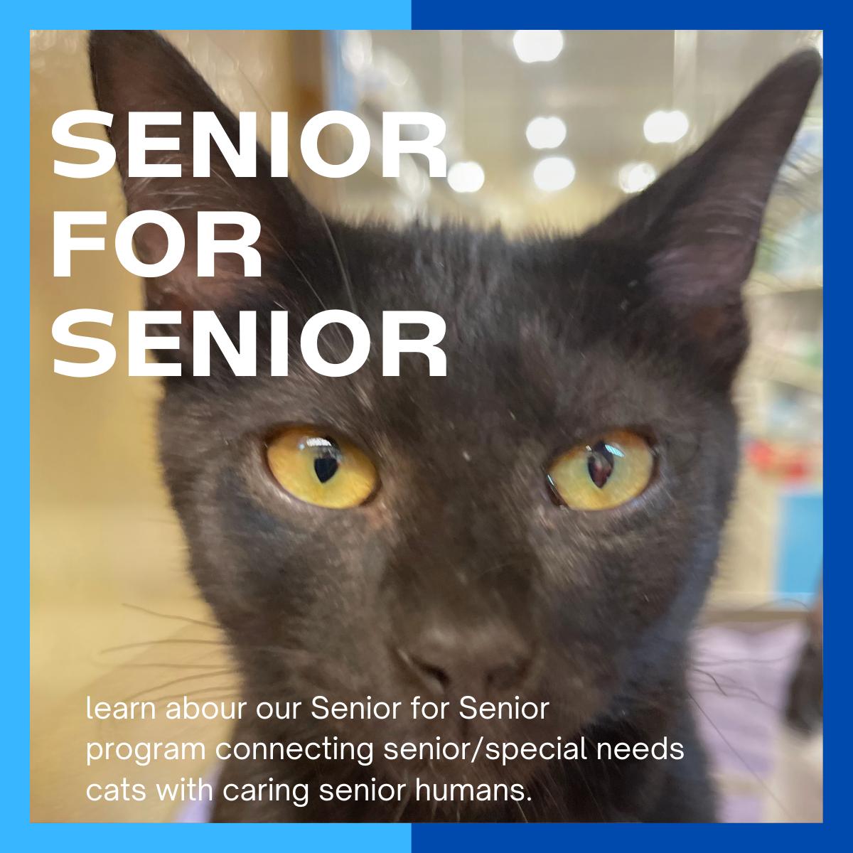 website_senior4senior