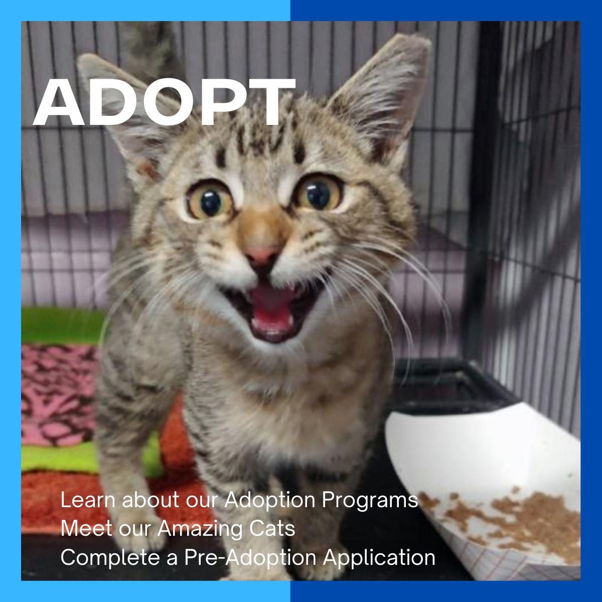 NEW_adopt