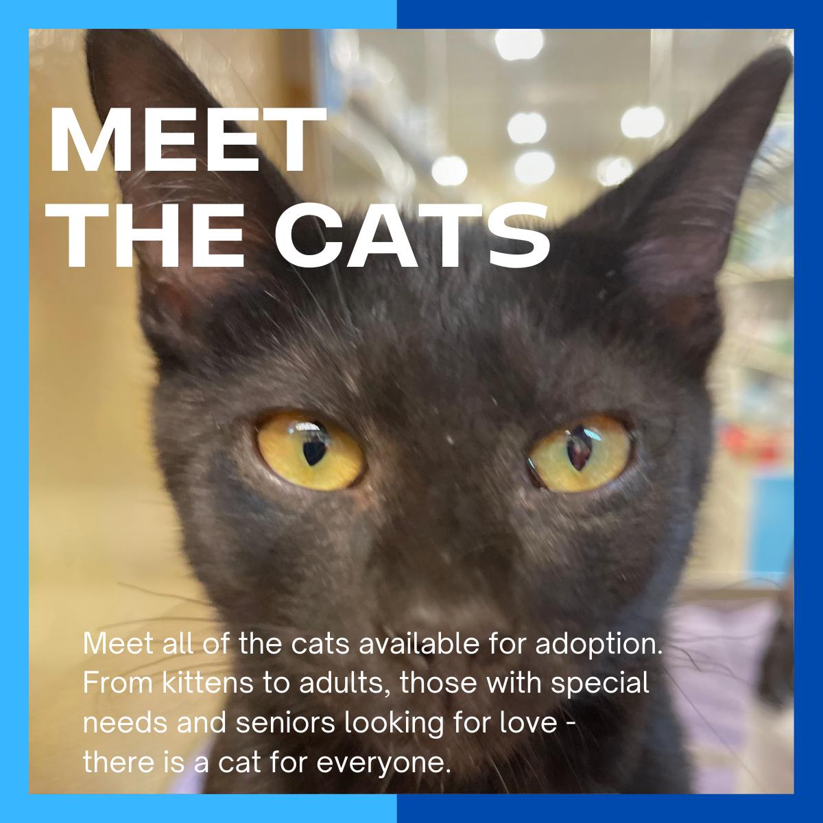website_meetthecats
