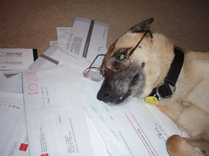 Ginger doing taxes