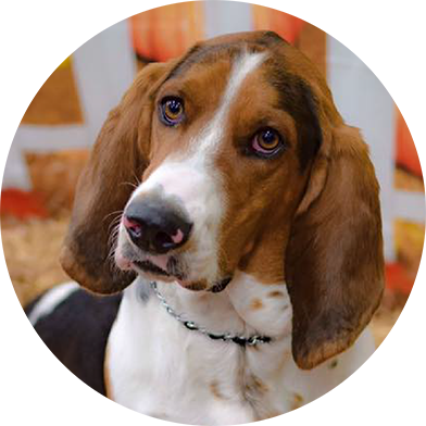 Support Helping Hands Basset Rescue