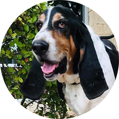 About Helping Hands Basset Rescue