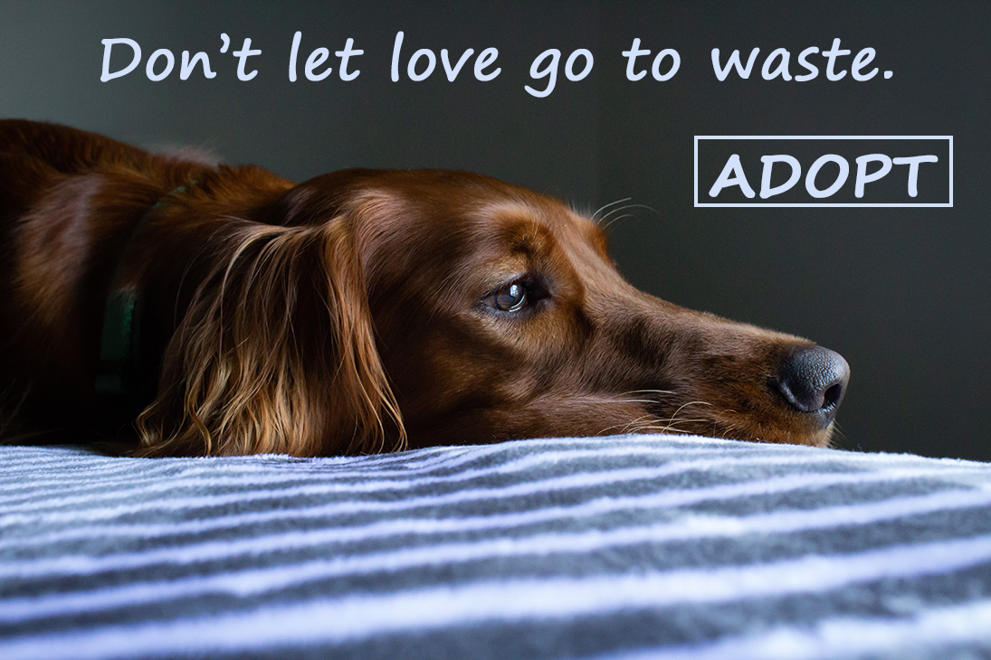 Don't let love go to waste - adopt!