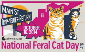 Feral Cat 2014