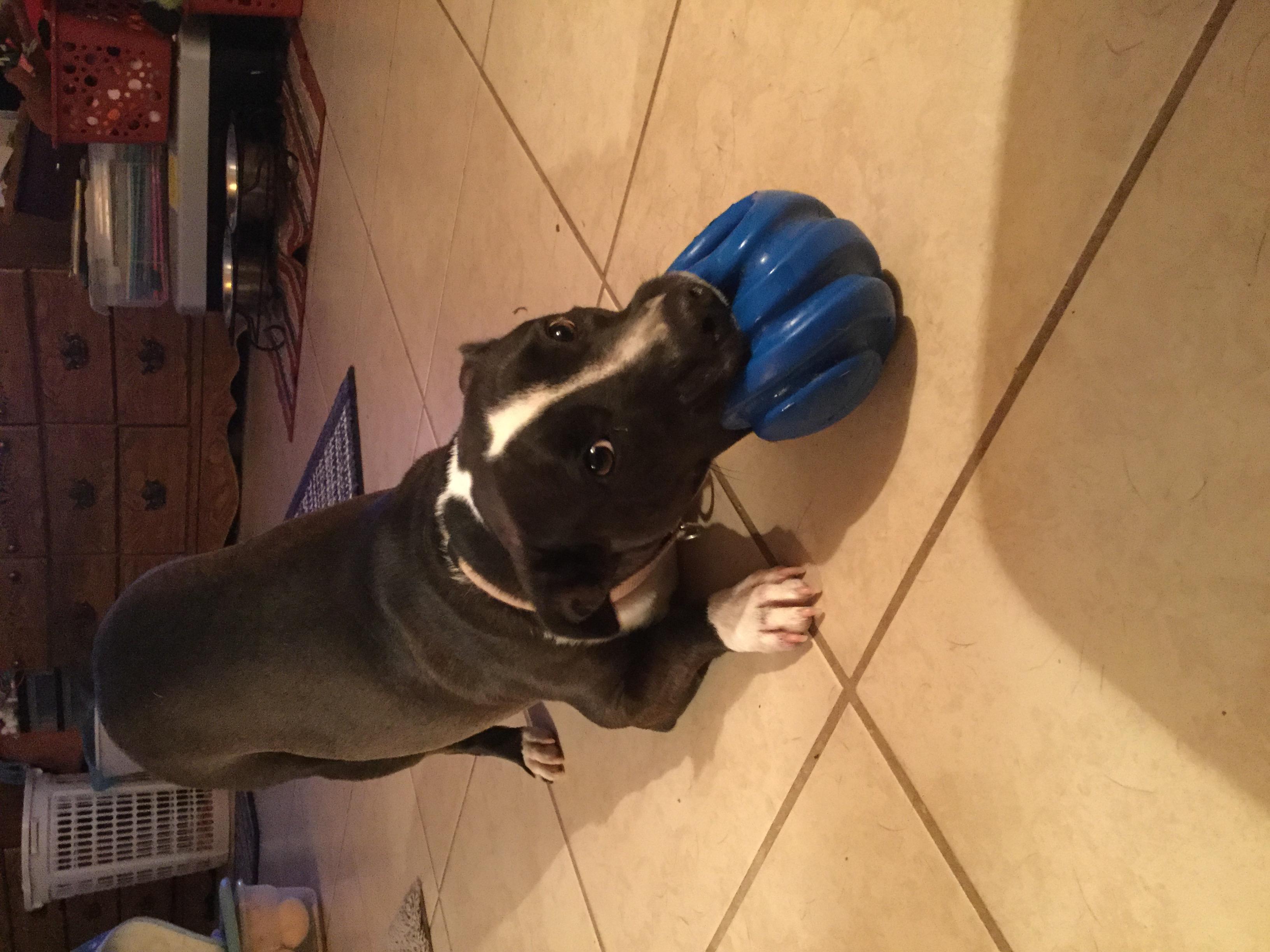 wi ball