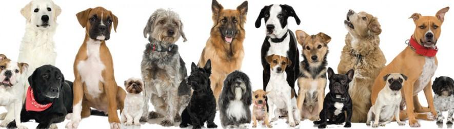 dogline