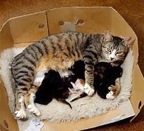cat & kittens in box