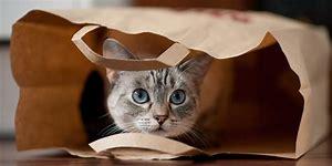 cat in bag