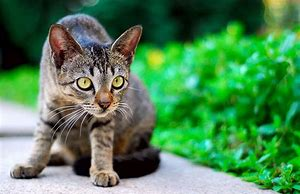 stray cat - top