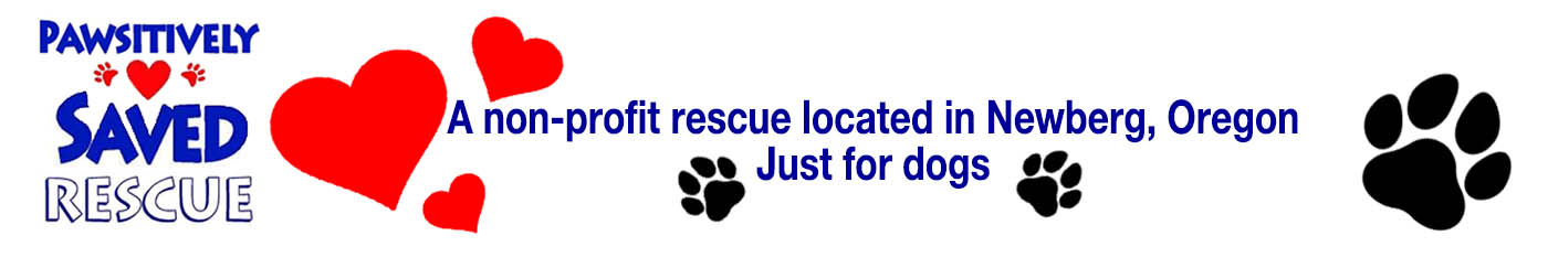 Pawsitively Saved Rescue for Dogs