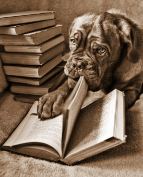 Web Image: Dog Reading