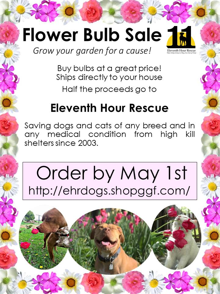 Eleventh Hour Rescue - Flower Bulb Sale @ Mount Arlington | New Jersey | United States