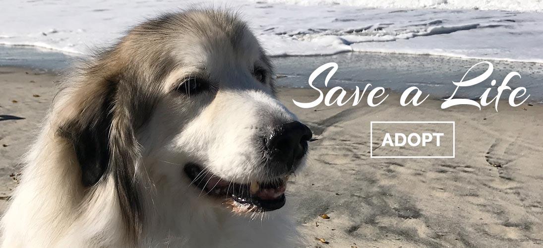 Save a Life - Adopt!