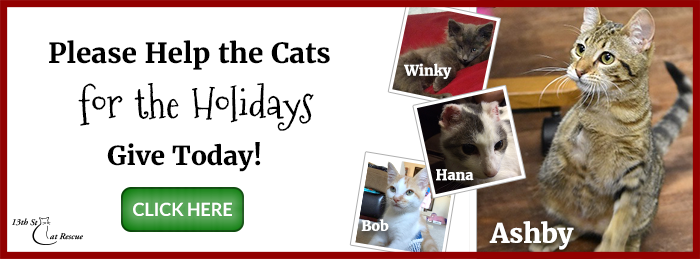 Help Cats for the Holidays - Give Today!