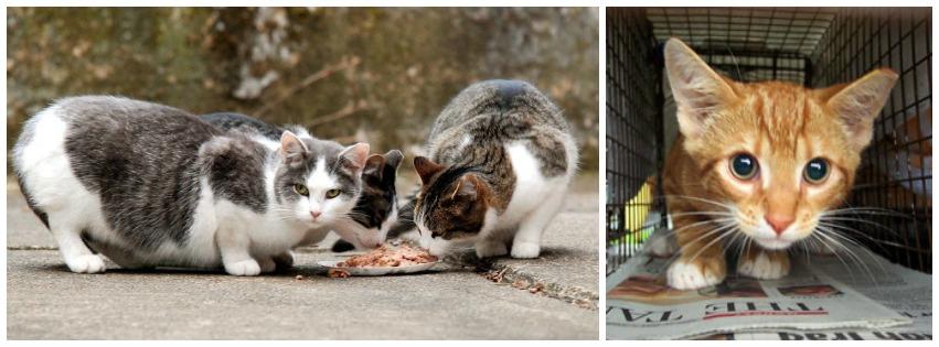 Trap - Neuter - Return (TNR) | San Jose | 13thstcats org