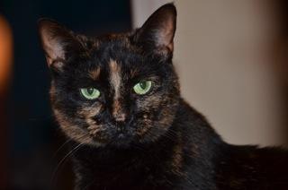 Lost cat June 2013