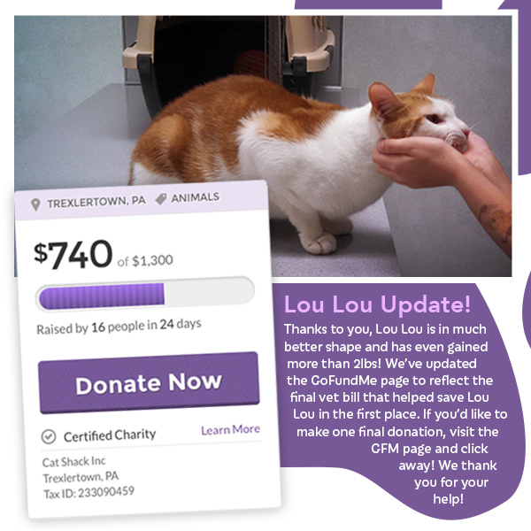 Update on Lou Lou - Visit his GoFundMe Page