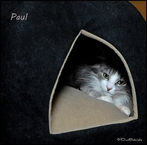 paul don's pic