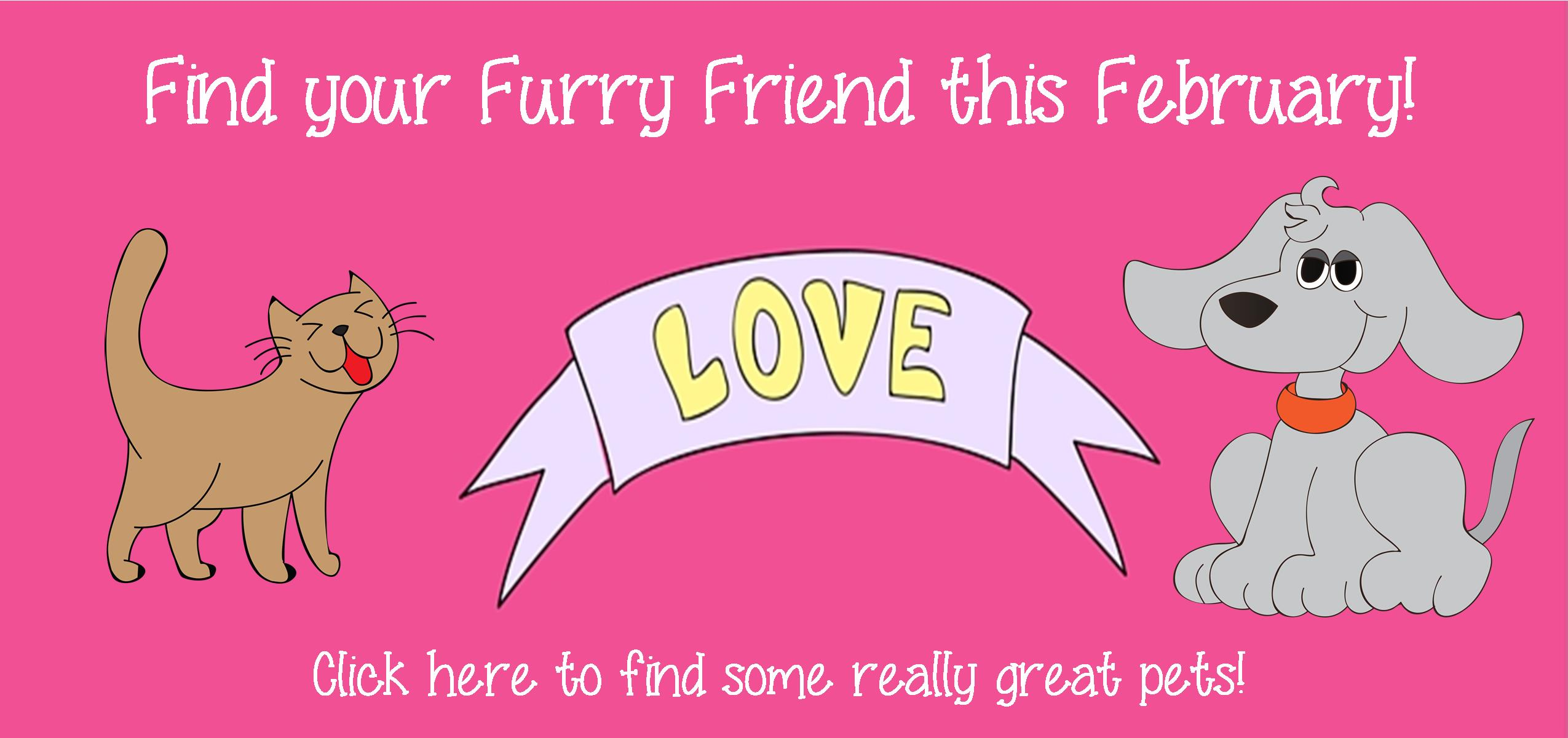 Find Your Furry Friend This February