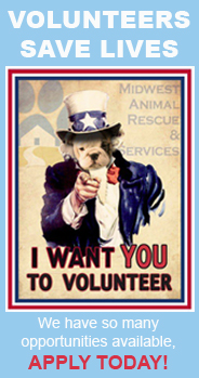 Volunteer Uncle Sam HOME