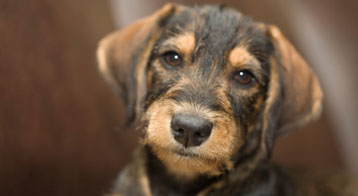 Pictures Of All Mixed Breed Dogs