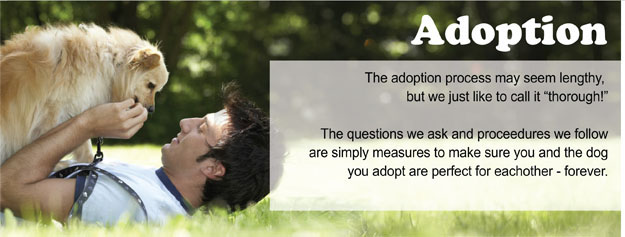 A Adoption header