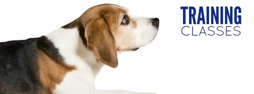 Training 2018 - Beagle
