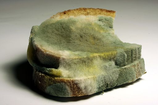 Try out these bread mold experiments at home!