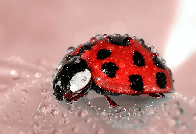 Insect lesson plans for preschool - Ladybugs