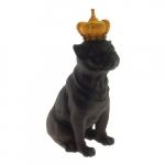 Dog coroa amarela