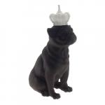 Dog coroa off white