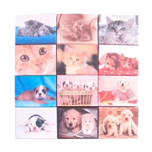 Kit 12 Caixas Cats And Dogs - 11x8 cm