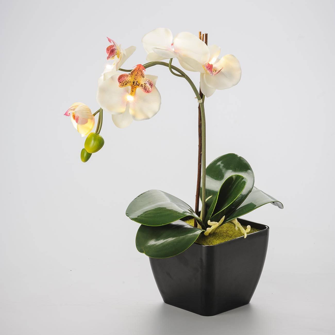 Cachepô Tradicional Preto - com Orquídeas Brancas e Luz - Prestige - 44x29 cm