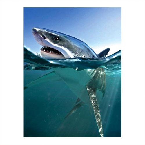 Placa Decorativa Tubarão ao Mar Média em Metal - 30x20 cm