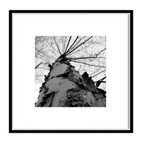 Quadro Árvore Preto e Branco Impressa em MDF - 50x50 cm