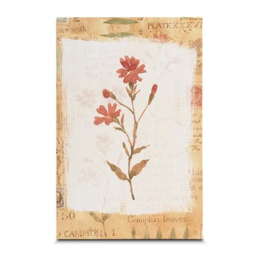 Quadro em Canvas Botânico - 45x30 cm