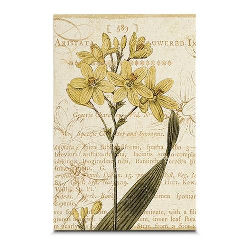 Quadro em Canvas Estudos da Flor - 45x30 cm