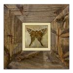 Quadro Decorativo Bown Butterfly em Madeira